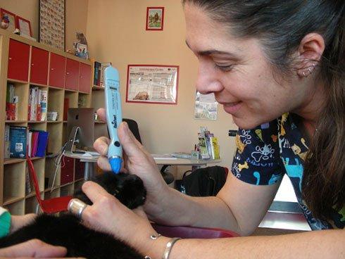 dottoressa mentre effettua una visita medica a un gatto