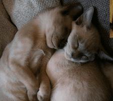 Pique and Bella