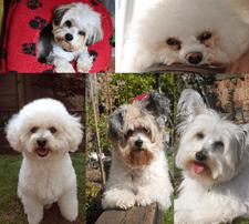 Yogi, Hachi, Sai-sai, Mollie & Buddie.