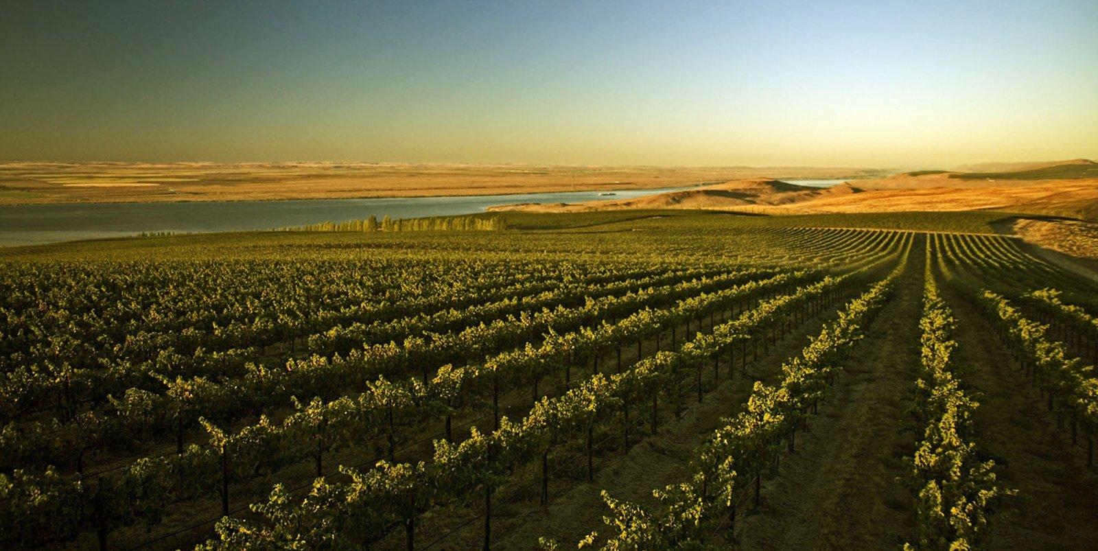 Chauffeured Winery Day Trips Mornington Peninsula