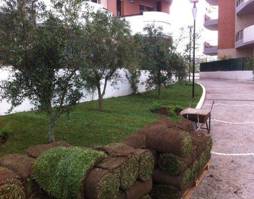 degli alberi in un giardino condominiale