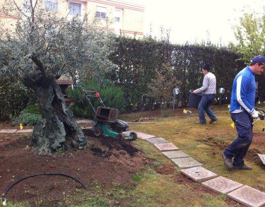 un giardino con un tagliaerba e dei giardinieri