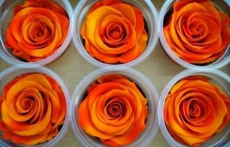 Da Ezio Fioraio a Caselle Torinese potrete organizzare il vostro evento scegliendo piante e fiori per l