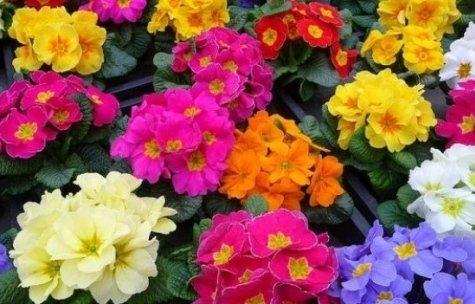 Ezio ti consiglierà nella scelta del fiore più bello che desideri donare ad una persona speciale.