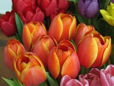 composizioni floreali caselle torinese, addobbi floreali matrimoni, addobbi floreali funerali, consegne a domicilio, oggettistica,