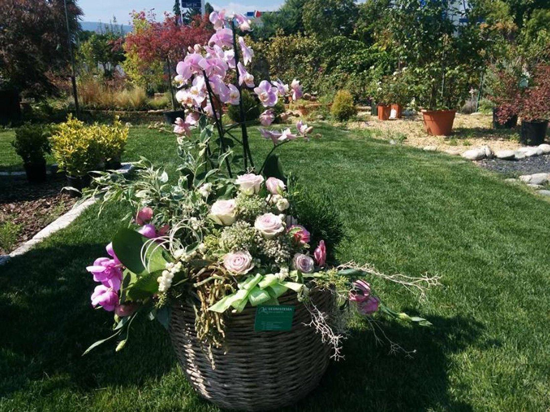 piante in esposizione nello spazio esterno del vivaio