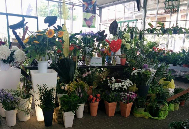 fiori freschi per bouquet e composizioni