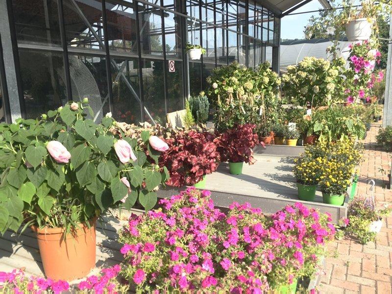 piante fiorite da esterni