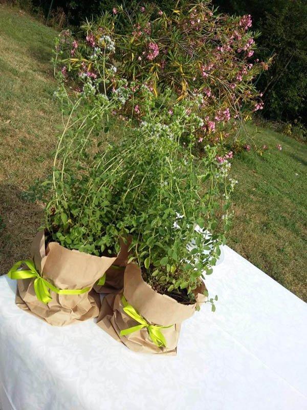 piante aromatiche su tavolo allestito per cerimonia