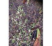 spray grass industries turf worm invasion control