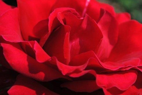 tavoli tra i roseti