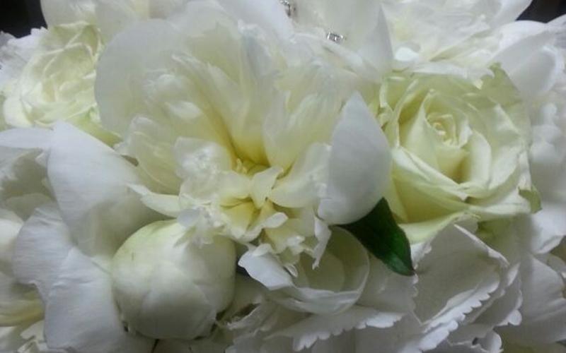 regalo fiori scorrano