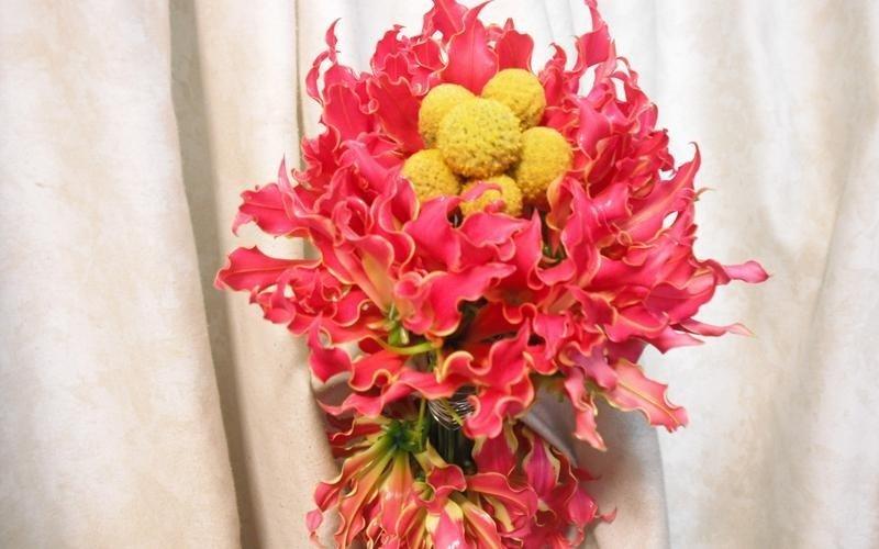 fiori freschi scorrano