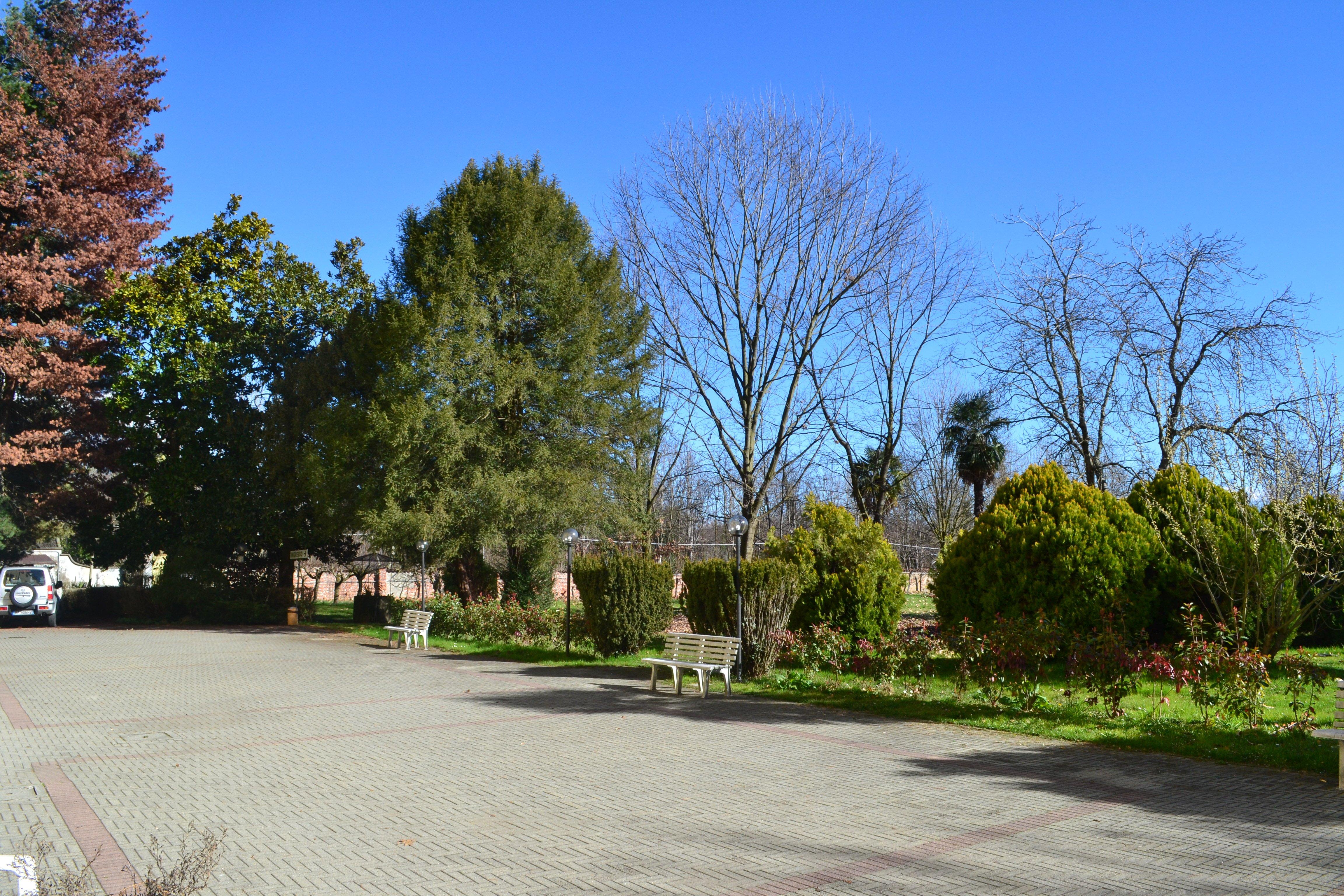 strata con aberi e giardini