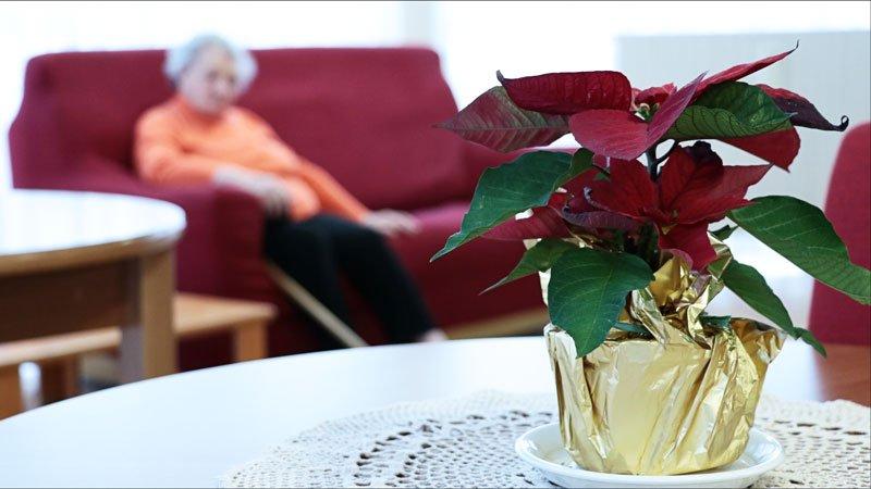 un vaso con una stella di Natale e una persona anziana seduta su un divano