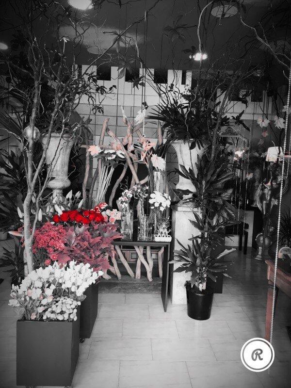 piante varie all'interno del negozio