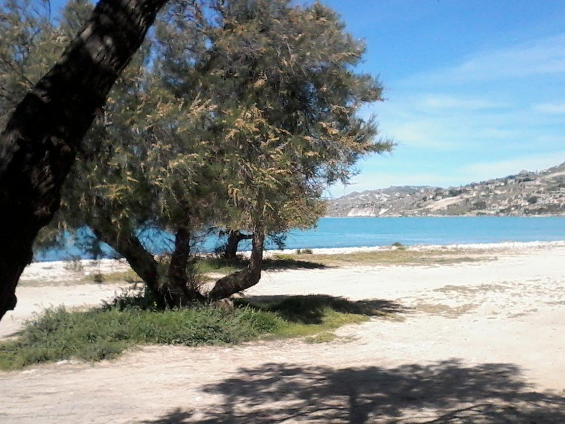 albero rigoglioso in spiaggia