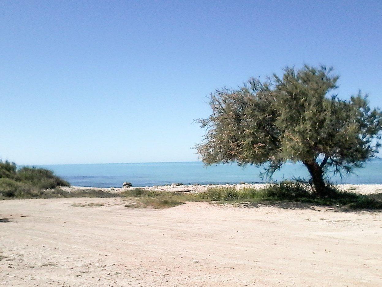 albero in riva al mare