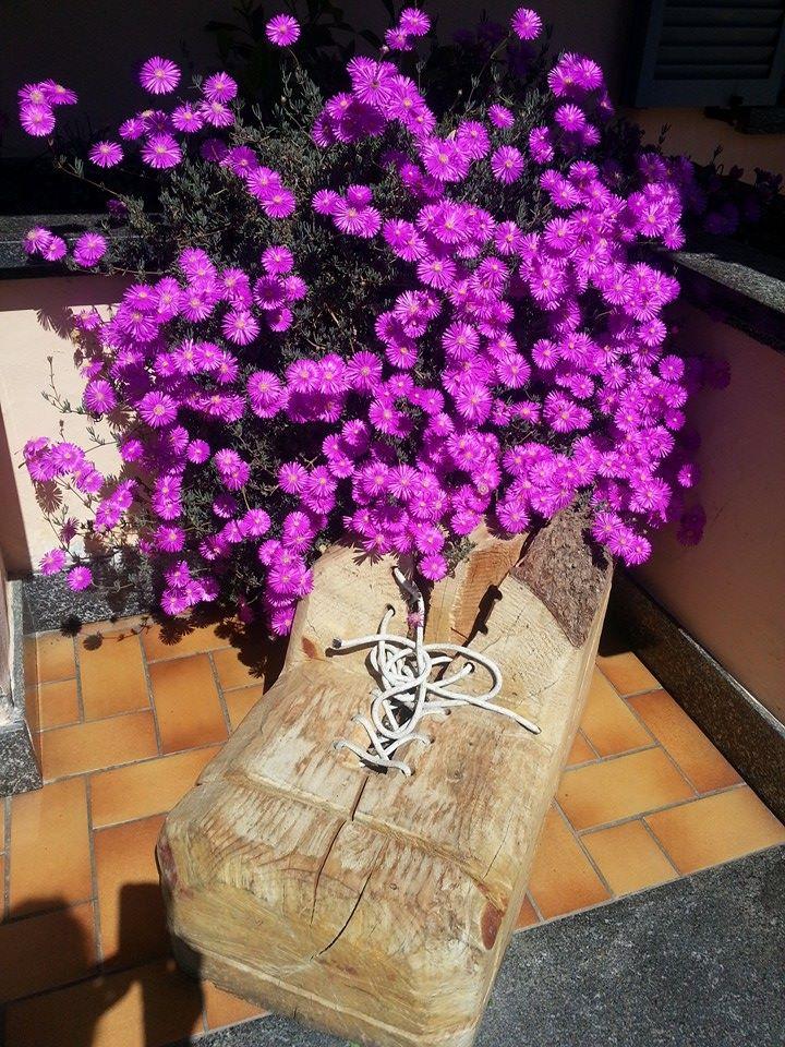 un vaso di fiori