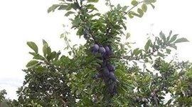 prodotti per alberi da frutto