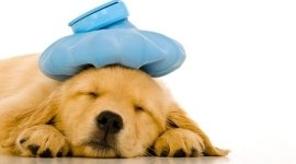 cucciolo malato