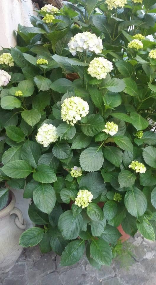 cespuglio di pianta con fiori