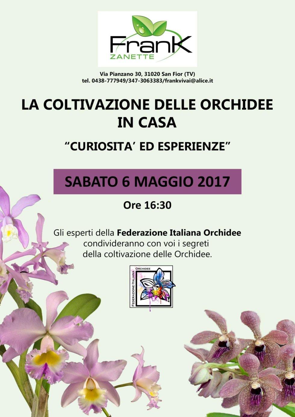 coltivazione delle orchidee in casa