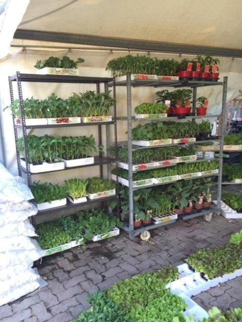 vendita piante e fiori teramo, vendita concimi teramo