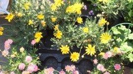 attrezzi da giardino teramo