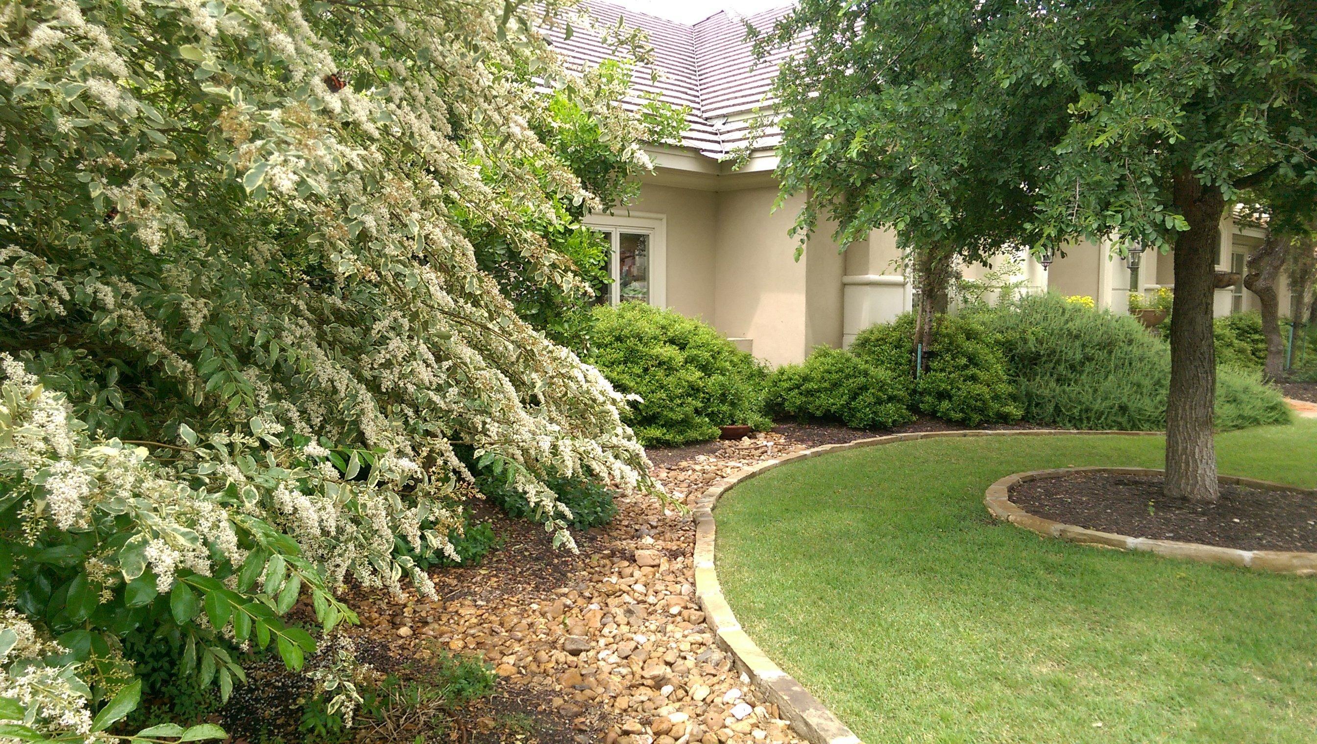 Lawn Maintenance & Organic Lawn Care San Antonio, TX