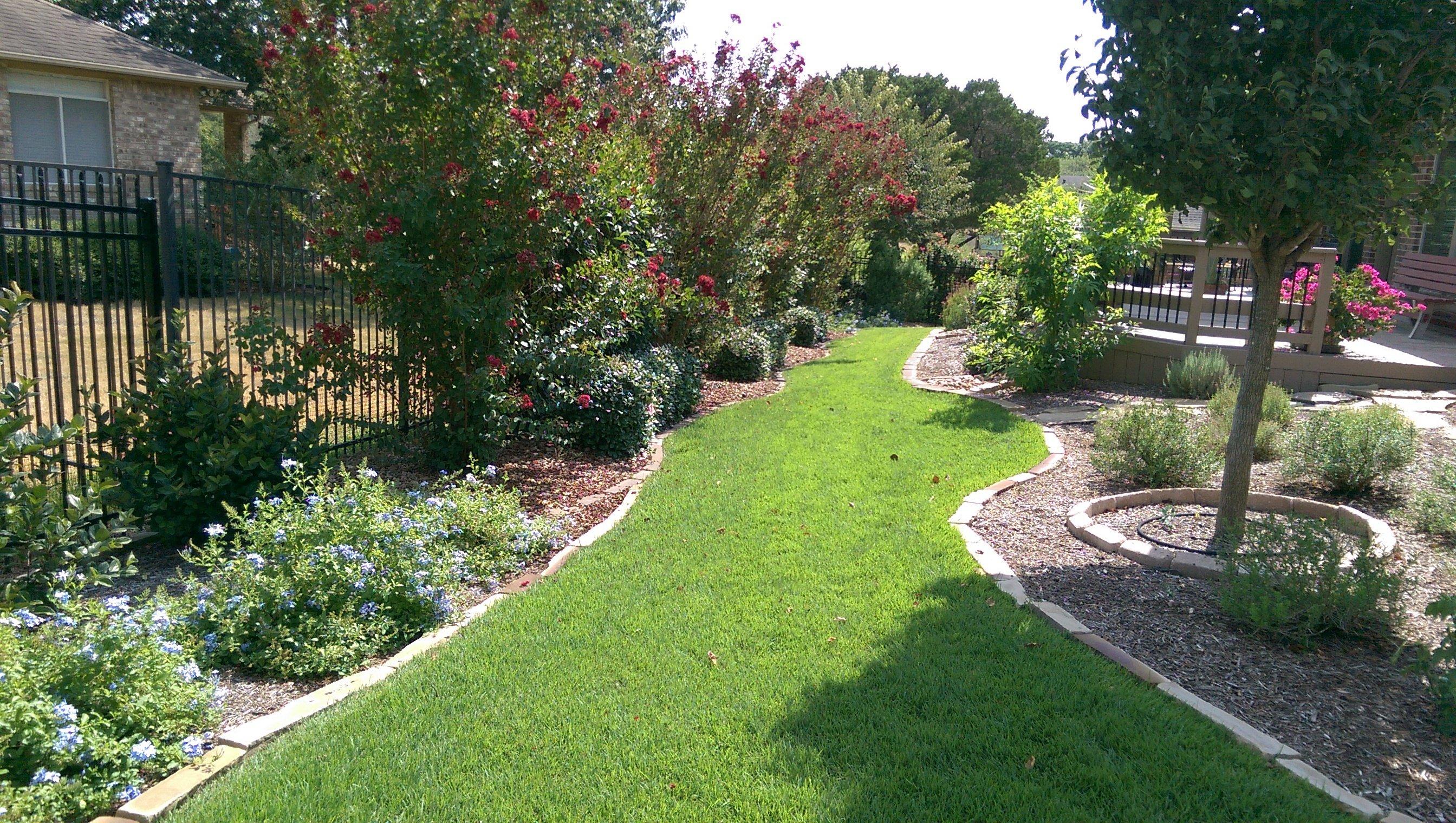 Brown Spots in Lawn & Lawn Maintenance San Antonio, TX