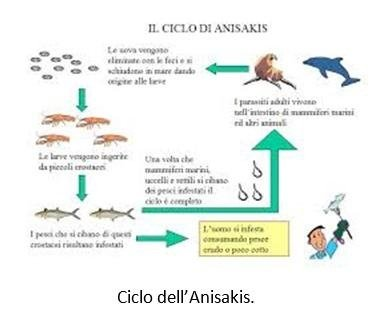 Ciclo dell'Anisakis