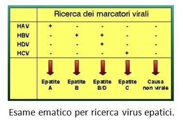 Esame ematico per ricerca virus epatici