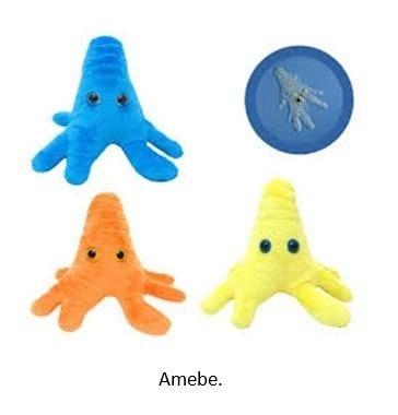 Amebe