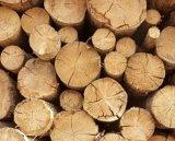 settore legno