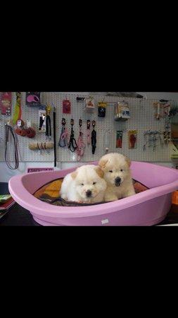 due cuccioli di cane in una cuccia rosa