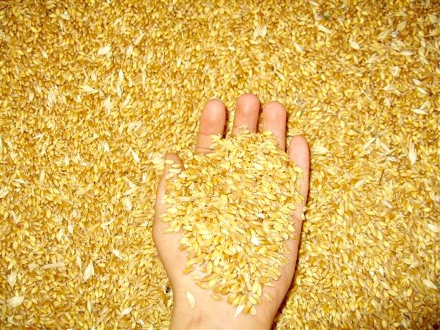 lavorazione di grano e frumenti