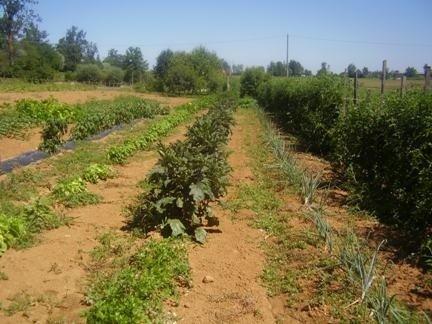 campi coltivazione propria