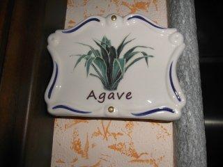 camera agave