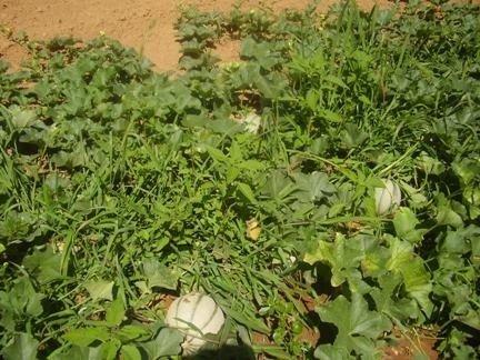 coltivazione verdure