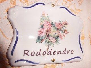 camera rododendro