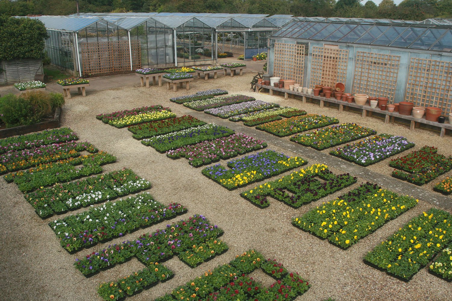 designer bedding plants