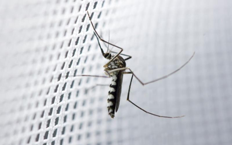 protezione zanzare