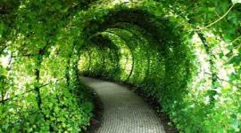 copertura sempre verde