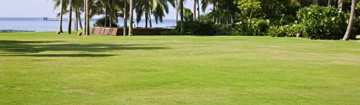 perth turf supplies big lawn near sea - Buy A Roll On Lawn From Perth Turf Supplies