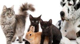 Vaccini cani e gatti