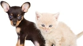 laboratori di analisi veterinarie