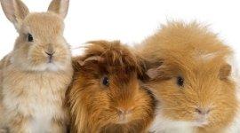 servizi veterinari