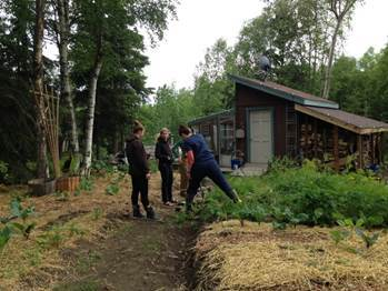 Volunteers participating in working on the garden patch in Anchorage, AK
