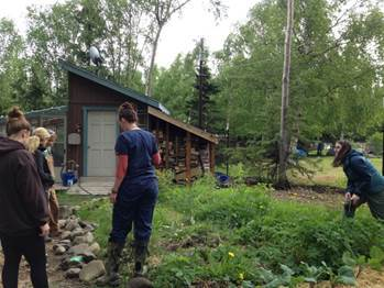 Volunteer participating in working on the garden patch in Anchorage, AK